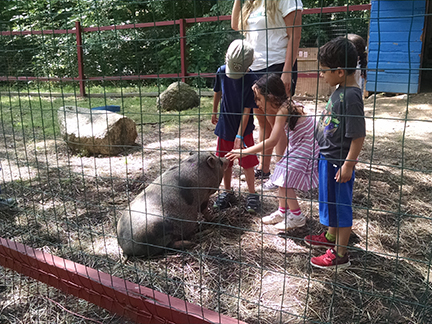 petting the pig